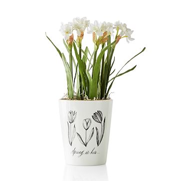 Maybelle Calligraphy Cachepot, Tulips